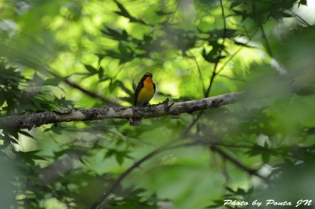 Bird1505-0034.jpg