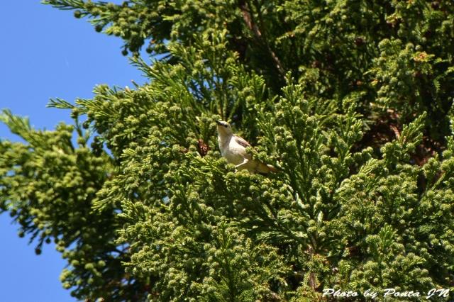 bird1506-0001.jpg