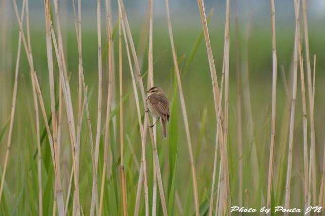 bird1506-0005.jpg