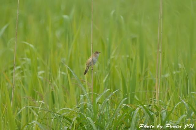 bird1506-0010.jpg