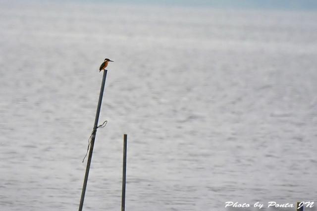 bird1506-0012.jpg