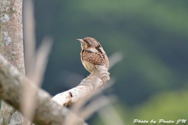 bird1506-0014a.jpg