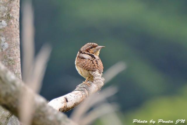 bird1506-0015a.jpg