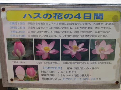 2015-06-20-009.jpg