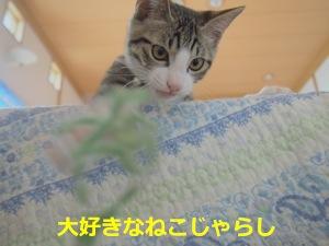 P7198959.jpg
