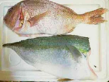 P7110030t鯛とヒラマサ