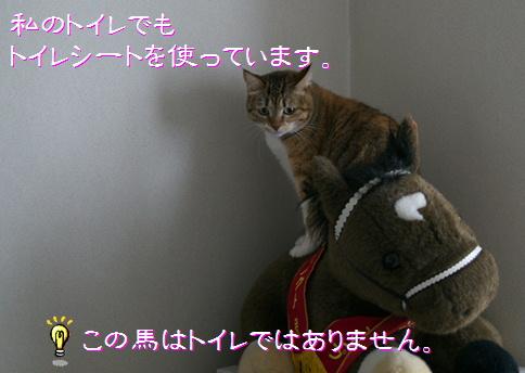 blogトイレシート3