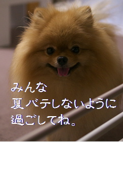 blogトイレシート4