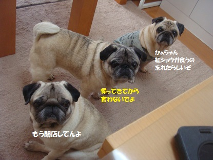 DSC04336_20150614161722816.jpg