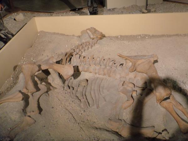 メガ恐竜博・02_convert_20150729225305