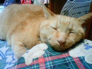 あごのせに使う枕
