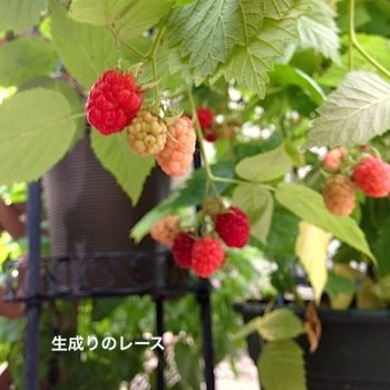IMG_9467-2.jpg