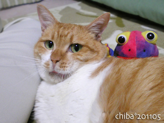 chiba15-06-10.jpg