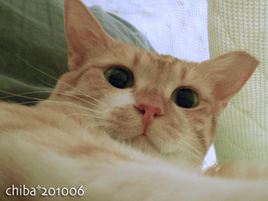 chiba15-06-29.jpg