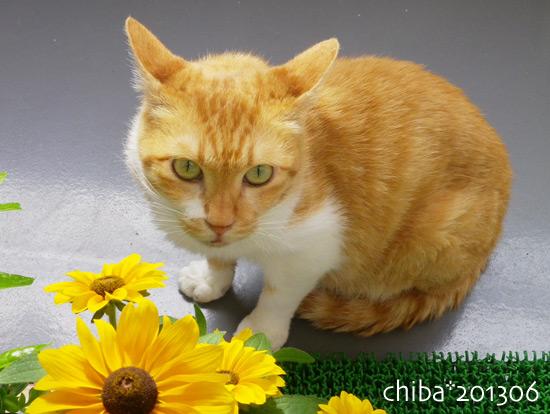 chiba15-06-40.jpg