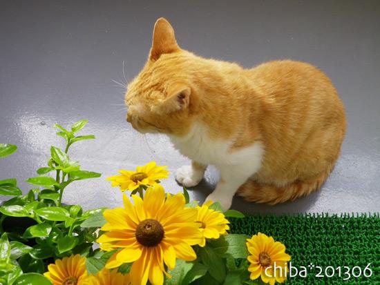 chiba15-06-41.jpg