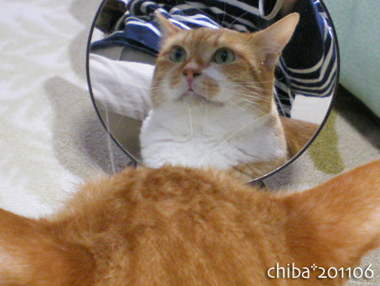 chiba15-07-07.jpg