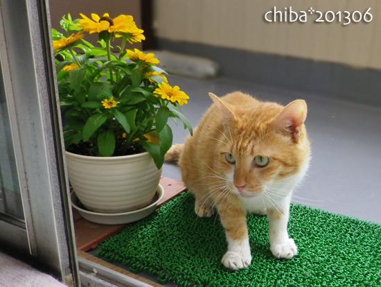 chiba15-07-16.jpg