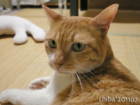 chiba15-07-23.jpg
