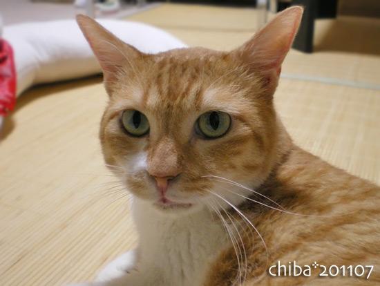chiba15-07-24.jpg