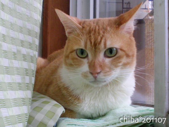 chiba15-07-28.jpg