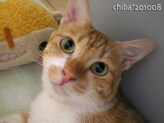 chiba15-08-03.jpg
