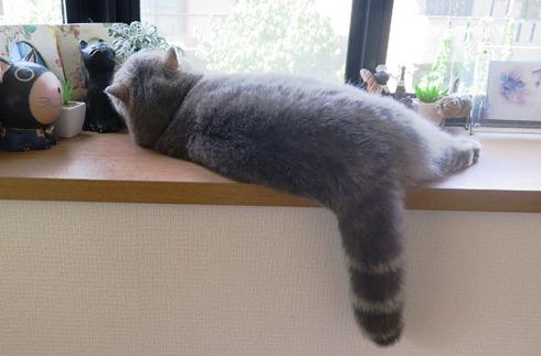 0)私は窓辺でお昼寝していました