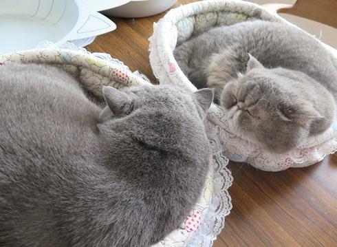 6)仲良くお昼寝ちゃん