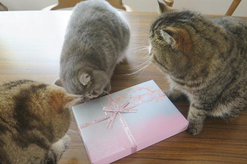 4)美世さんからの桜ゼリー♡