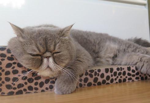 1)ぷくさまお昼寝ちゅう~~
