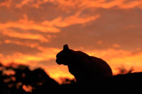 夕焼けと猫