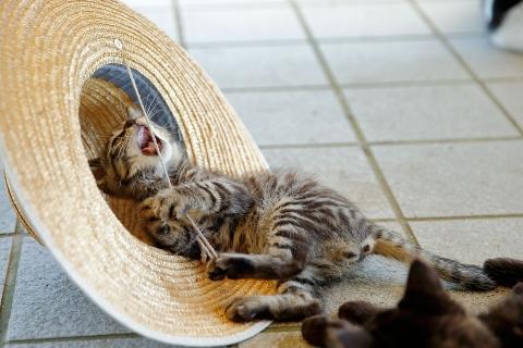 子猫と麦わら帽子