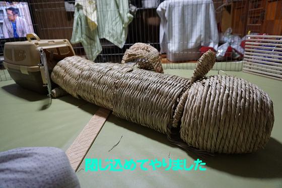 ぴょん子150730_01