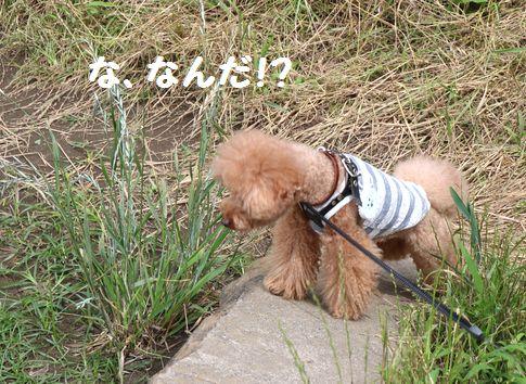 引地川親水公園2