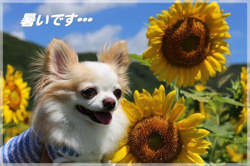 IMG_1792_convert_20150727202310.jpg