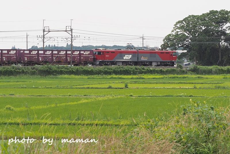 P6080109 b