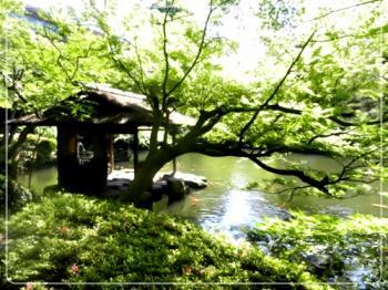 八芳園の庭