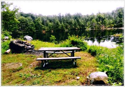 ビーバーの住む池