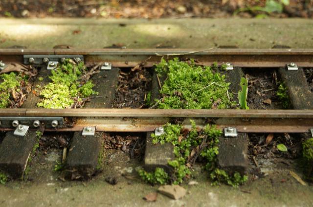 苔の生えた軌道