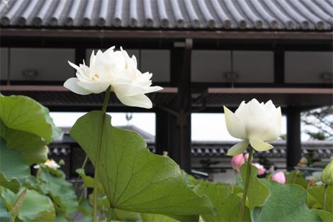 20150712中山寺1