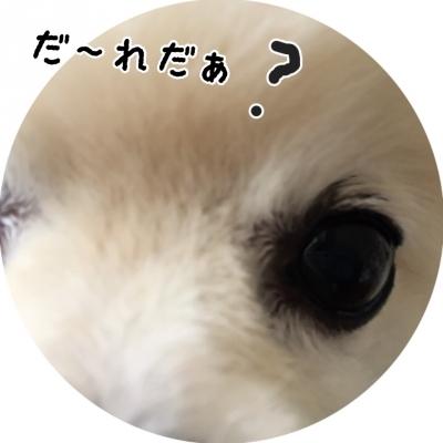20150719183253187.jpg