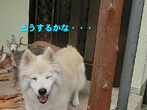 a_20150731011129d49.jpg