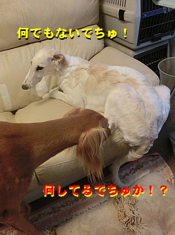 b_20150709233643ee7.jpg