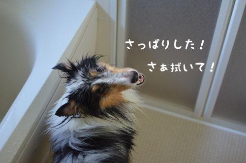 IMG_5521.jpg