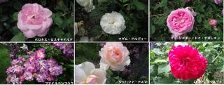 0523takanasibara6.jpg