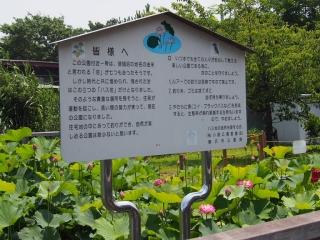0712fujisawahasu12.jpg