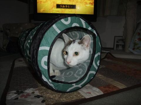 ビート トンネル
