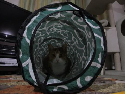 わか トンネル