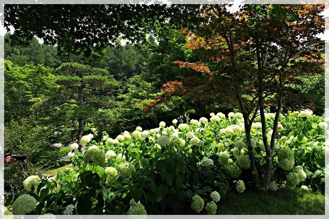 花の公園3