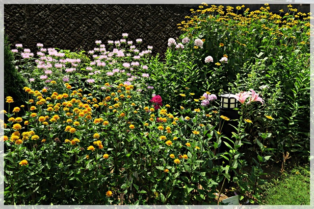 花の公園2